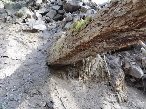 Horný / starý tajch: drevený kôl v rozrušenom telese hrádze
