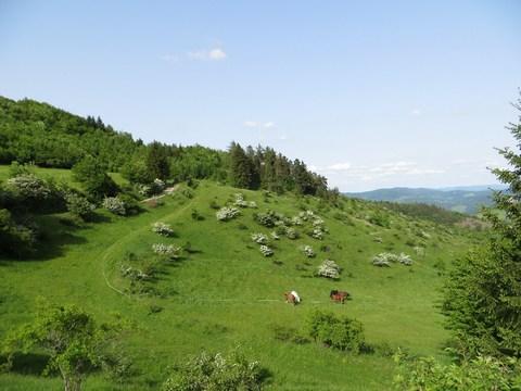 Svahy severovýchodne od tajchu Ottergrund